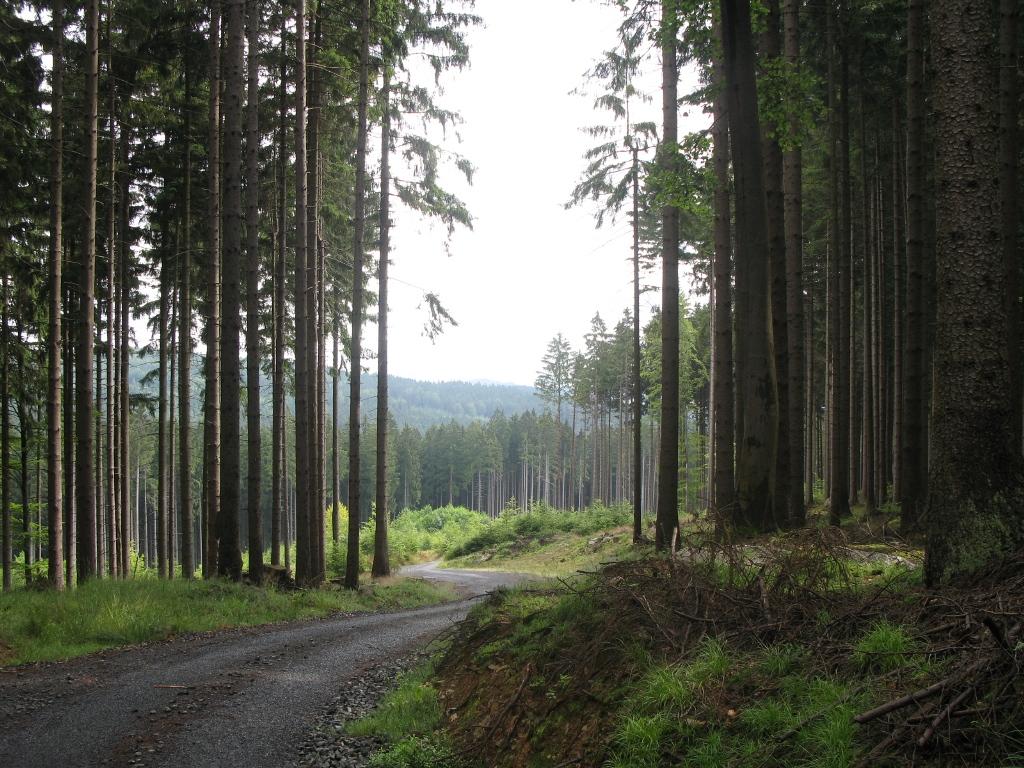 V_lese_na_vylete_01