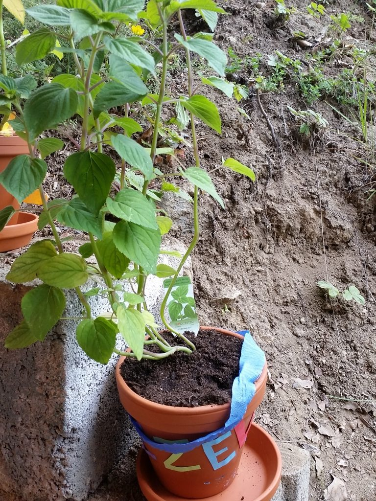 zahradnici_3